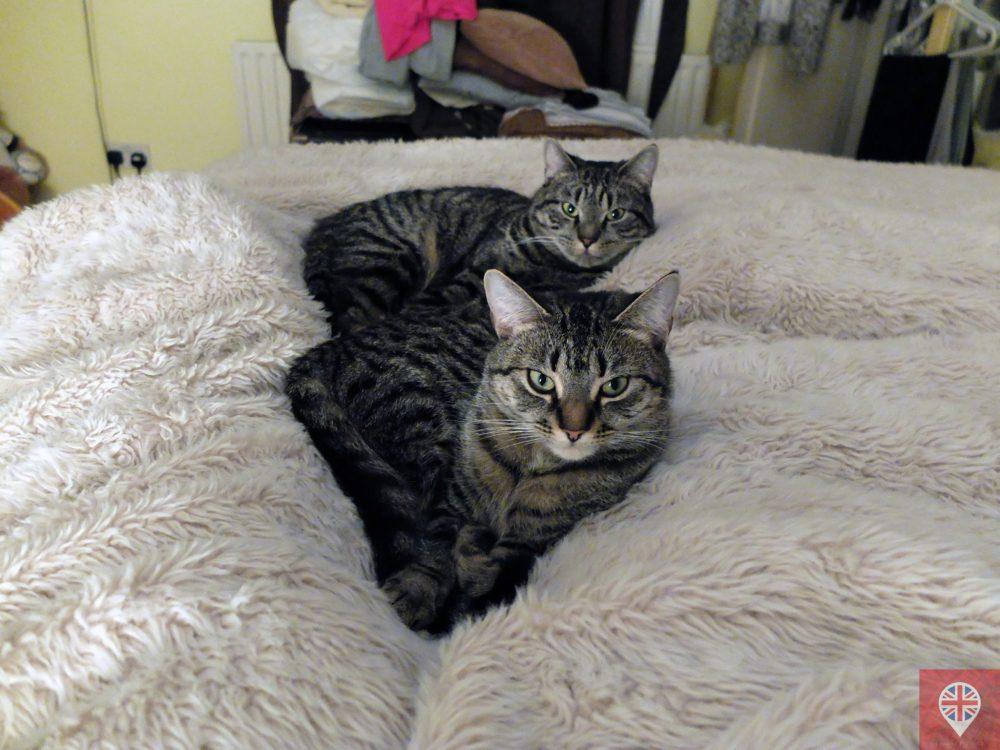 Meus gatos, meus filhos!