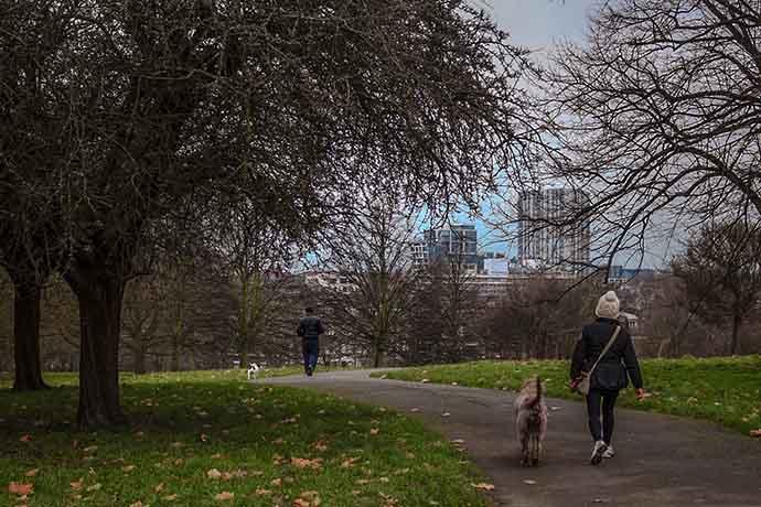 primrose-hill-dog-walking