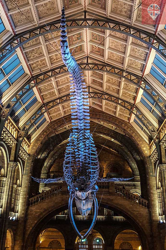 natural history museum baleia azul