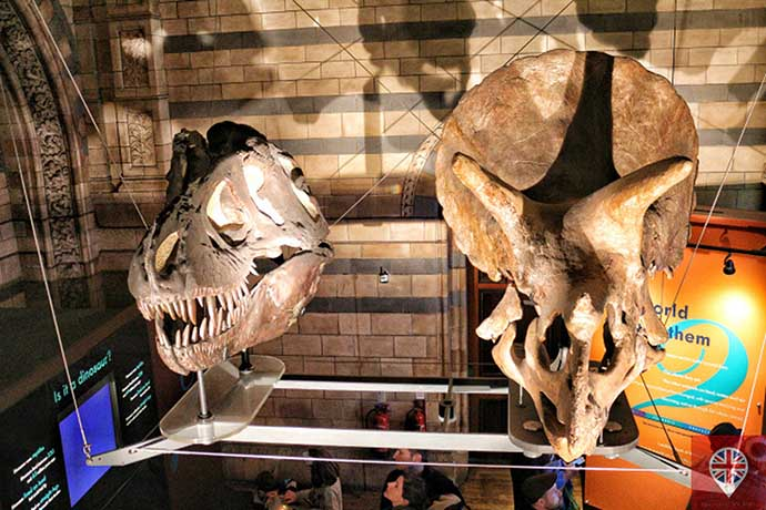 natural history museum dinosaur heads