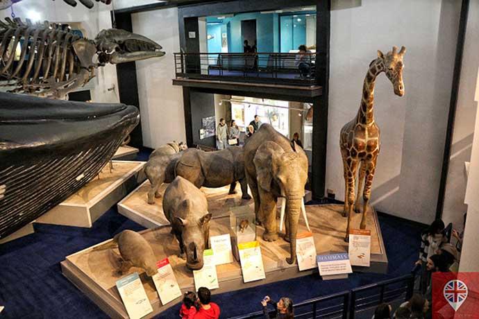 natural history museum mamiferos 2
