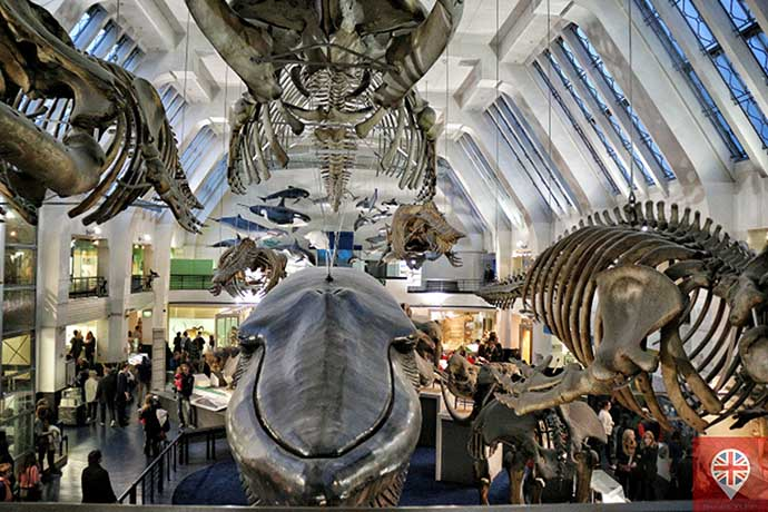 natural history museum mamiferos