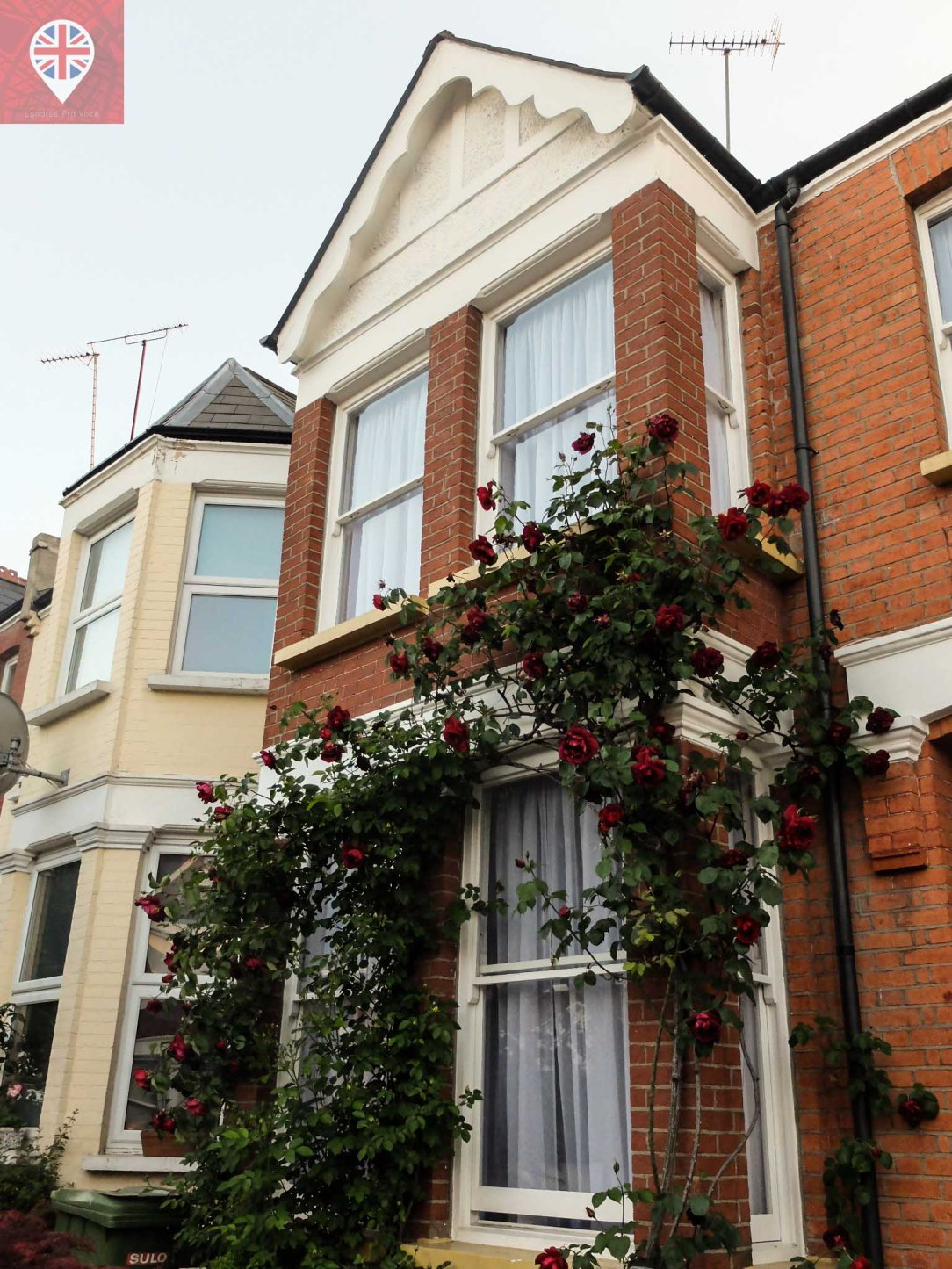 london house roses