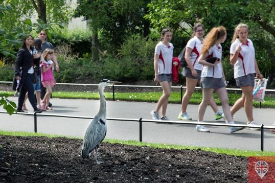 O grande pássaro observa as meninas chegando pra jogarbadminton.