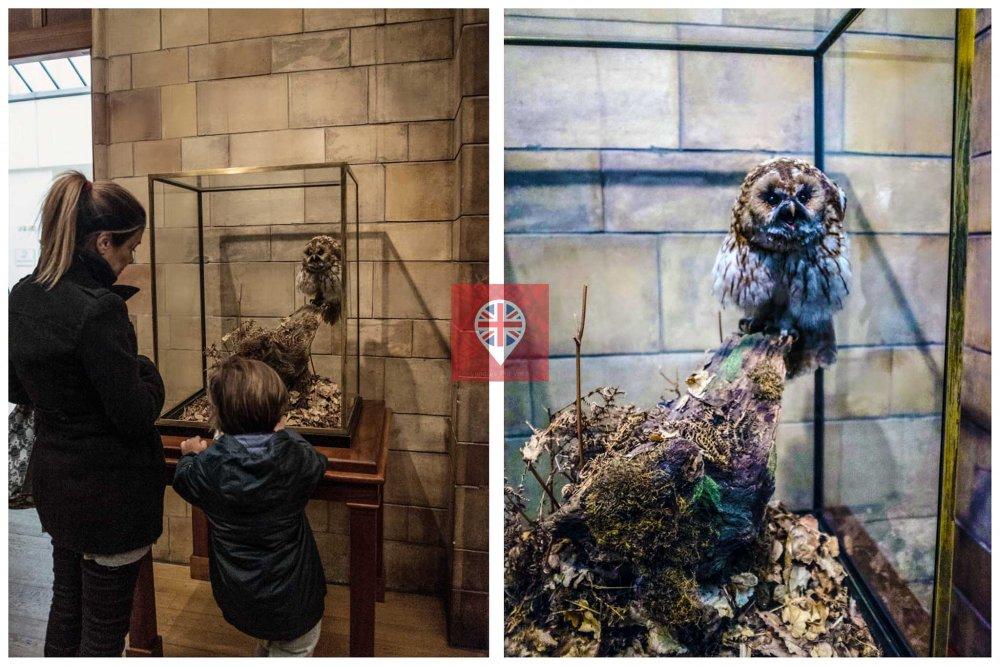 museu-de-historia-natural-coruja