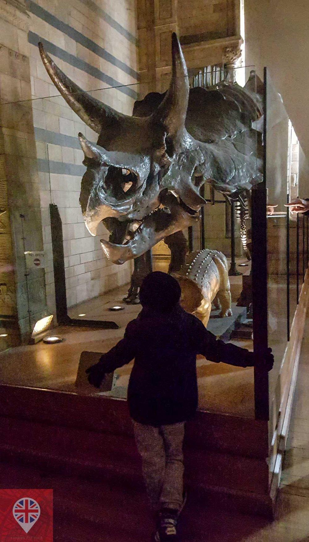 museu-de-historia-natural-esqueleto-triceratopo