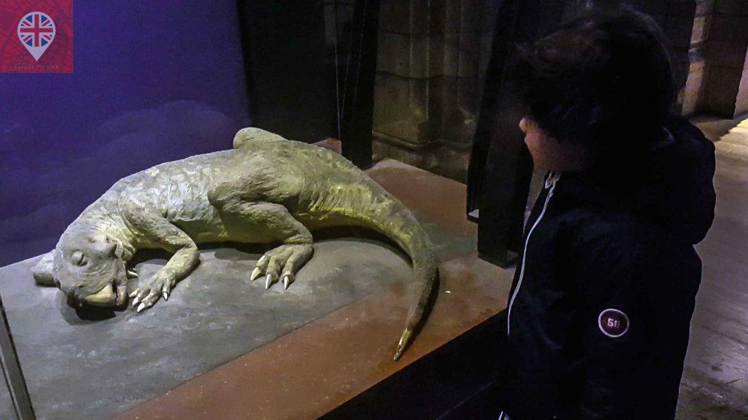 museu-de-historia-natural-lagarto
