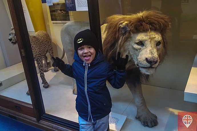 museu-de-historia-natural-leao