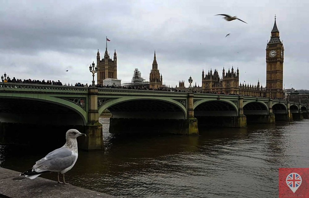 big ben seagull