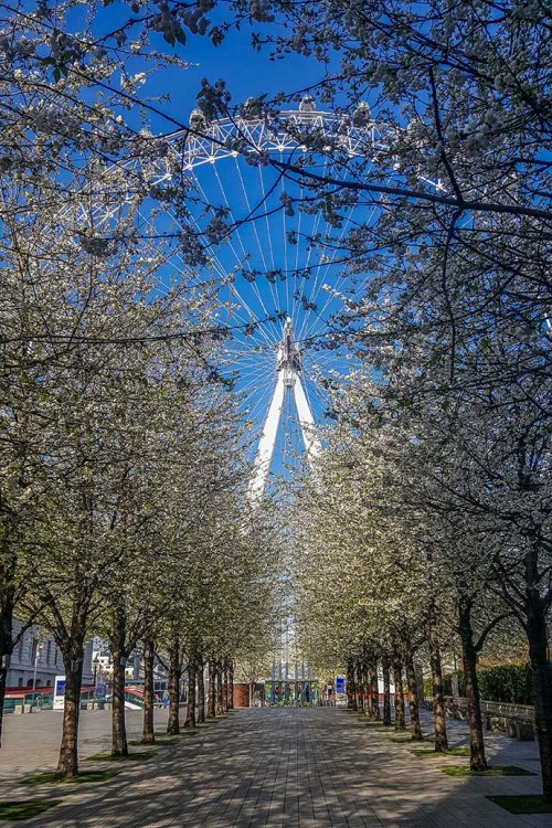 cerejeiras london eye