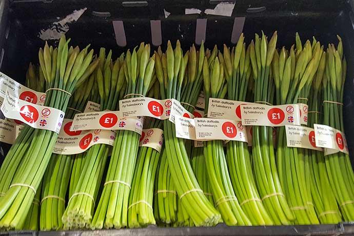 daffodils supermarket