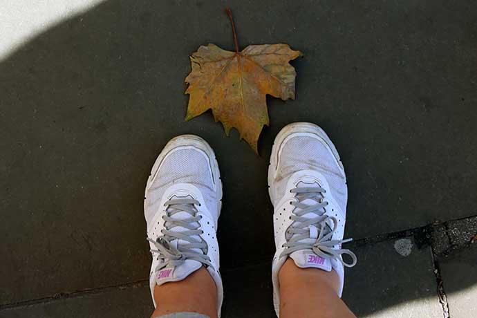 maple leaf outono