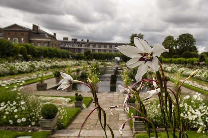 kensington-palace-white-garden-flower