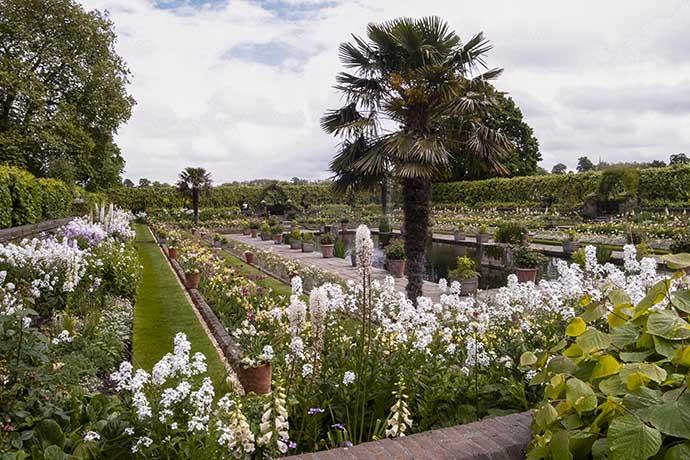 kensington-palace-white-garden-flowers