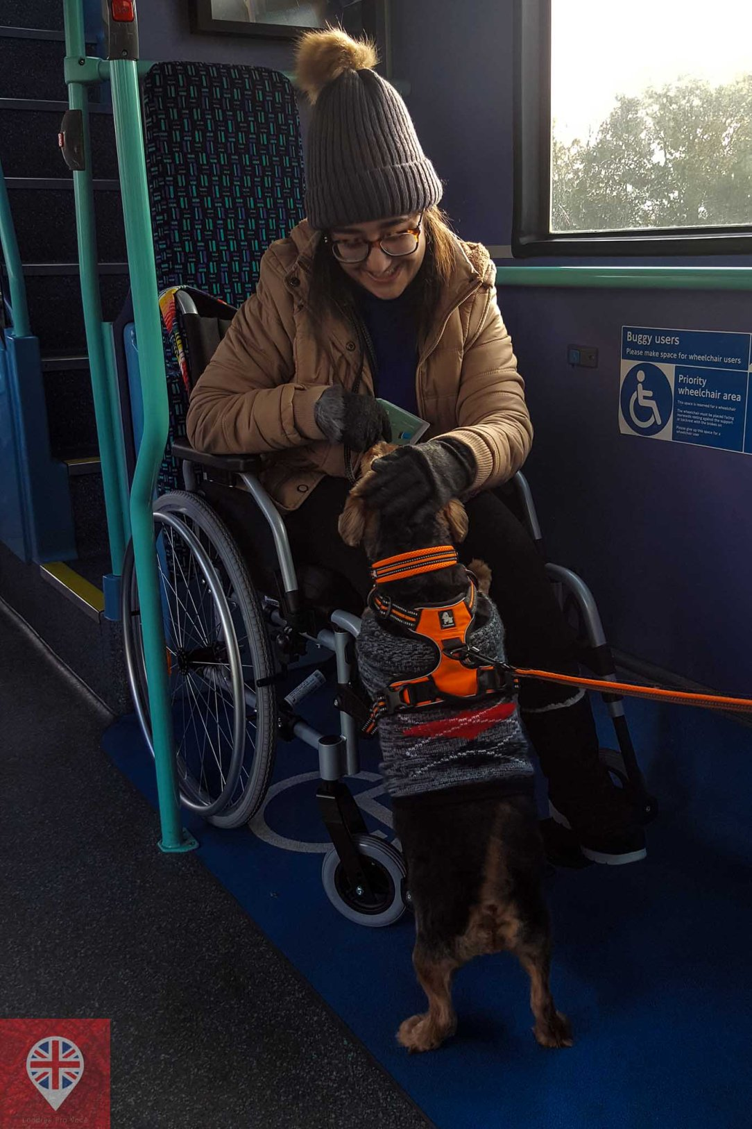 bus accessibility luiza dog