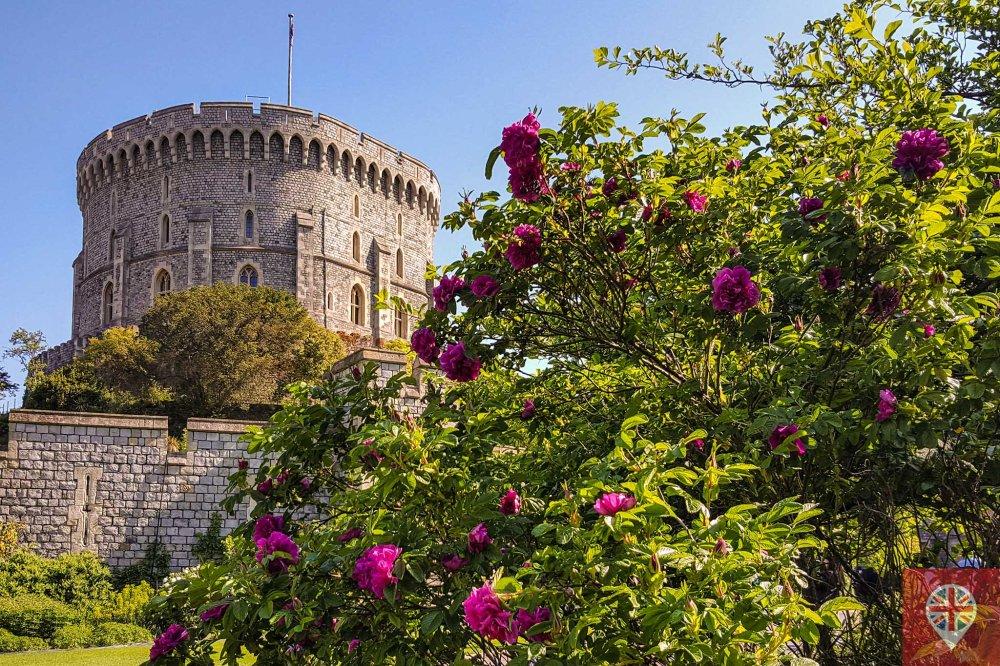 windsor castle flowers