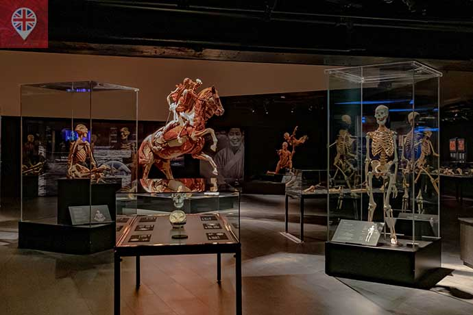 Body Worlds exhibition