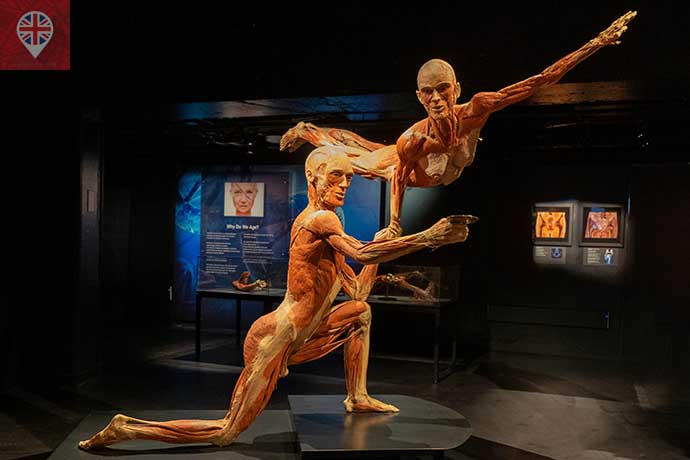 Body Worlds mirror of life