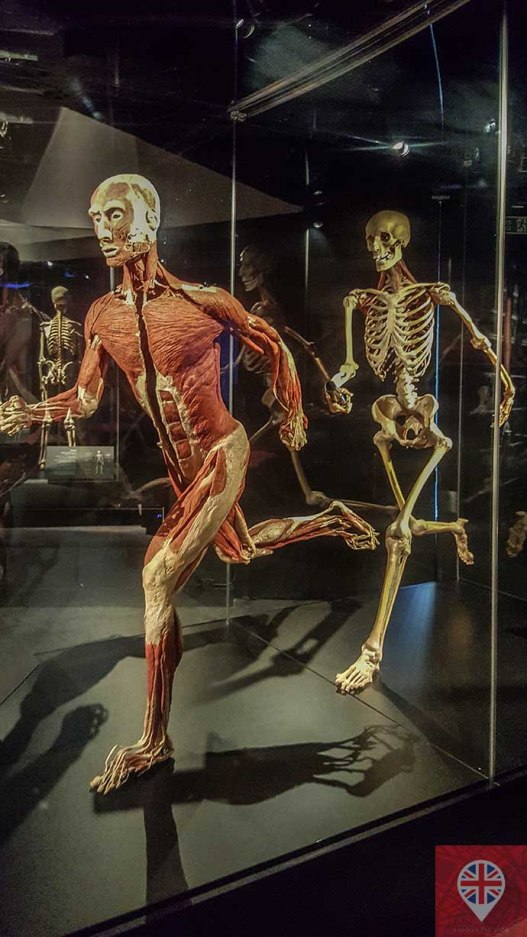 Body Worlds runner
