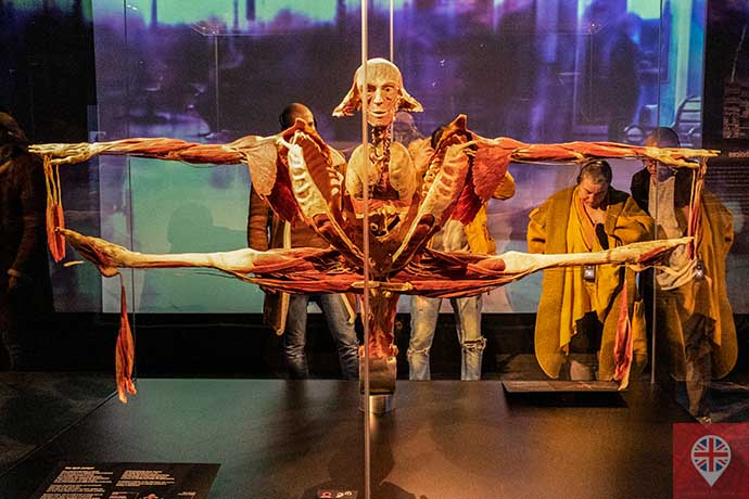 Body Worlds Split Jumper