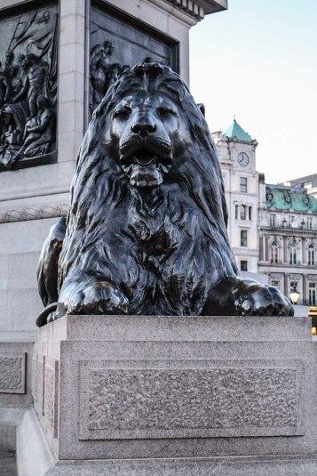 Trafalgar Square lion close up