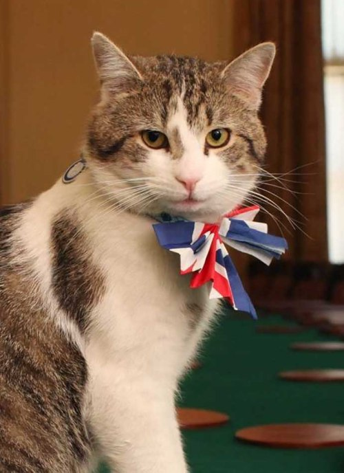 Larry_Chief_Mouser